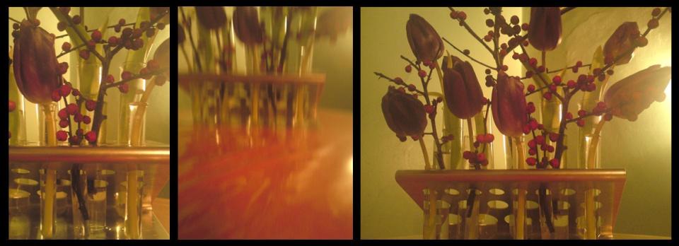 tulipes-du-soir