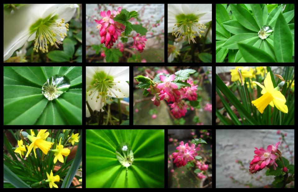 printemps32