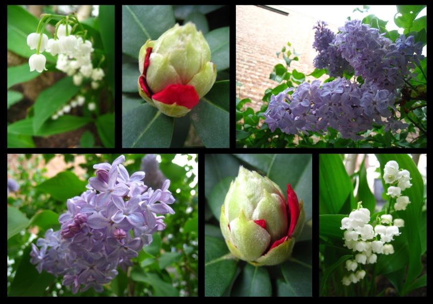 printemps36