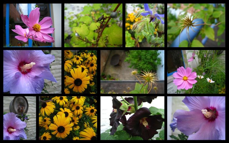jardin107