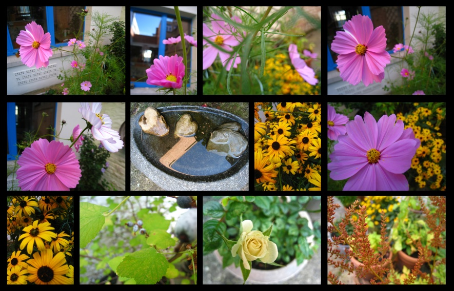 jardind'automne8