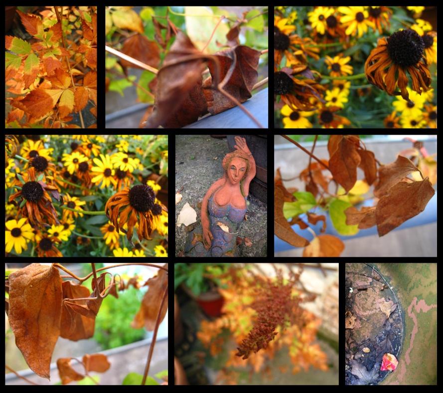 jardind'automne11