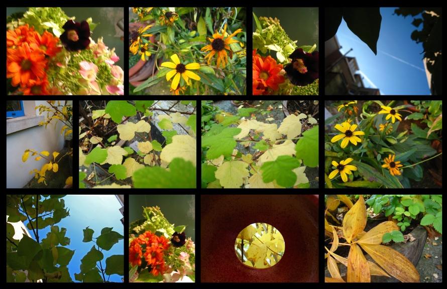 jardind'automne13