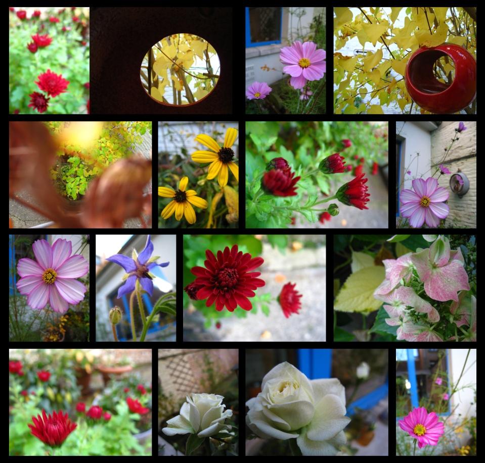 jardind'automne14