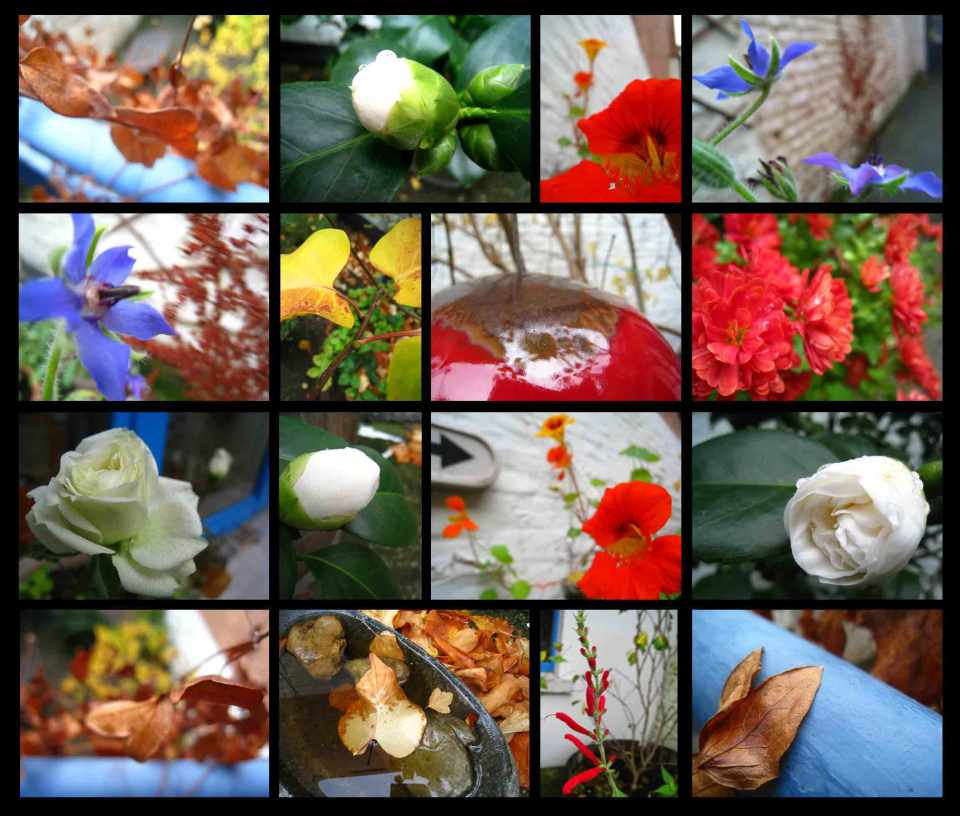 jardind'automne16