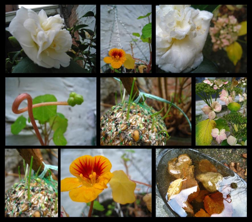 jardin-d'hivers1