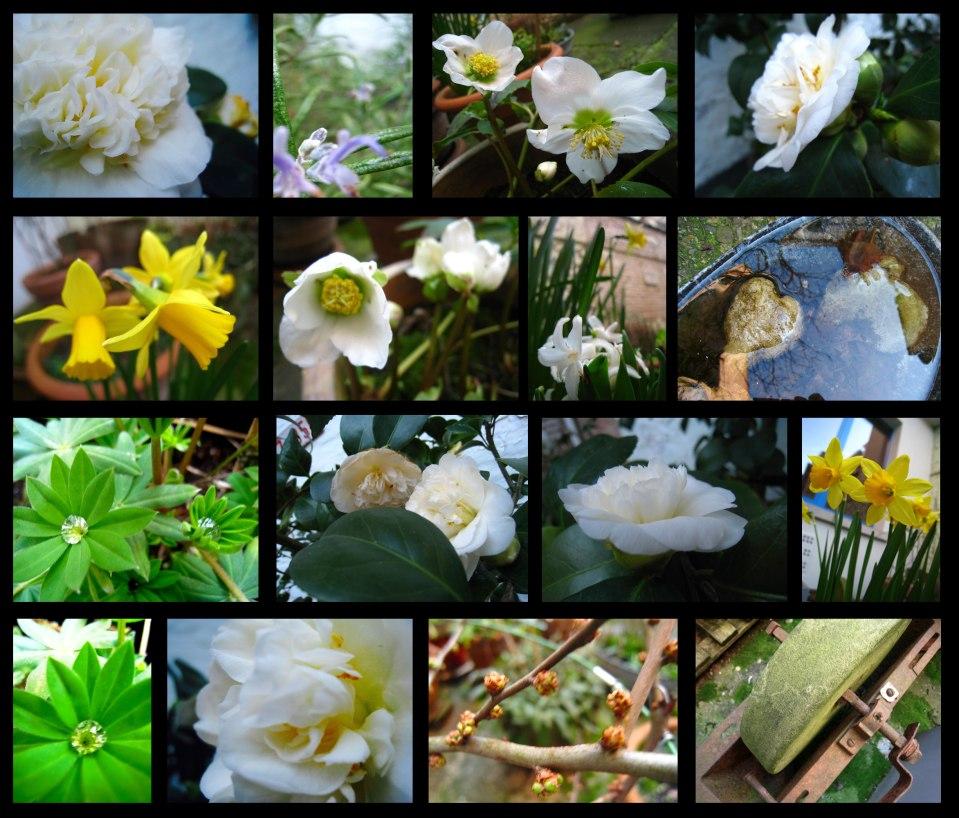 printemps-précoce2