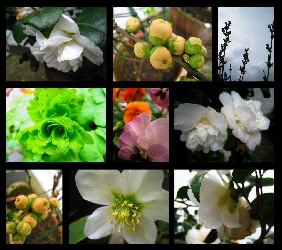 jardin-de-printemps1