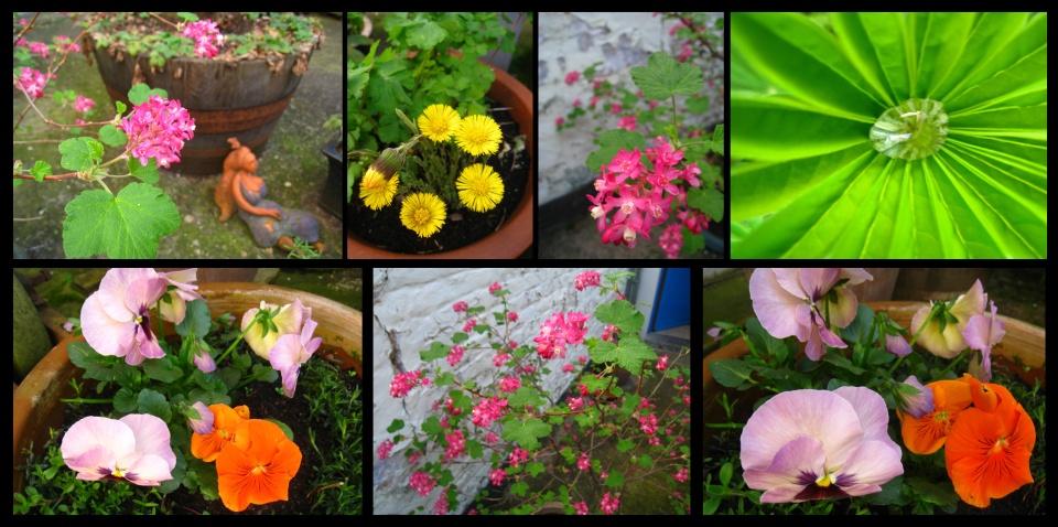 jardin-printemps4