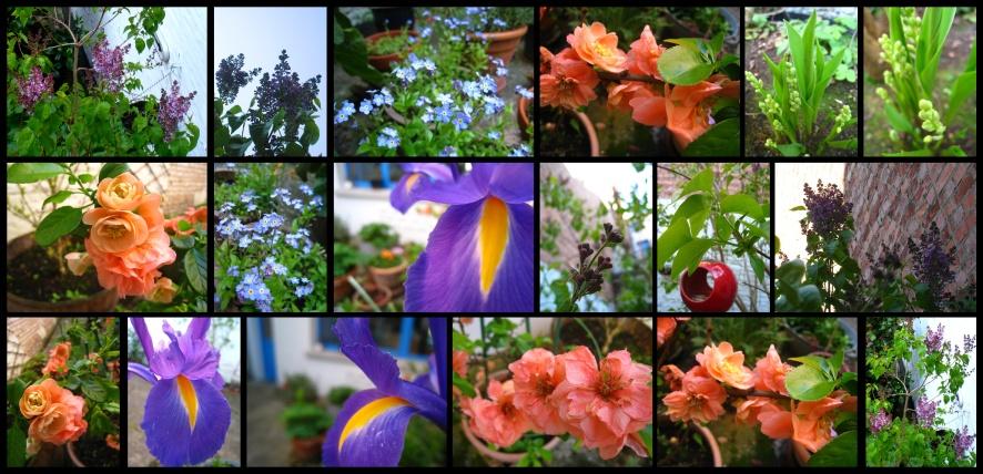 jardin-printemps5