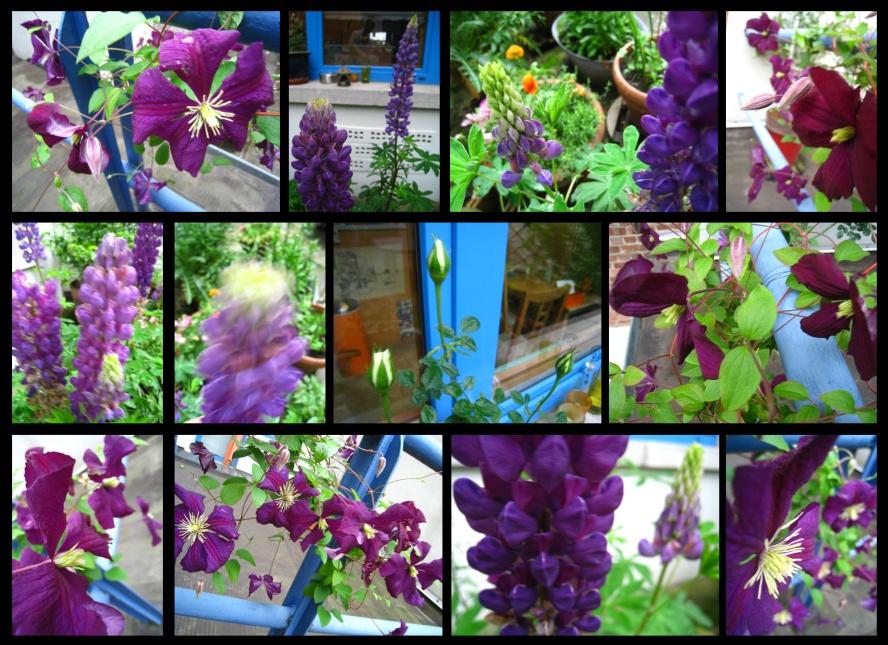 jardin111