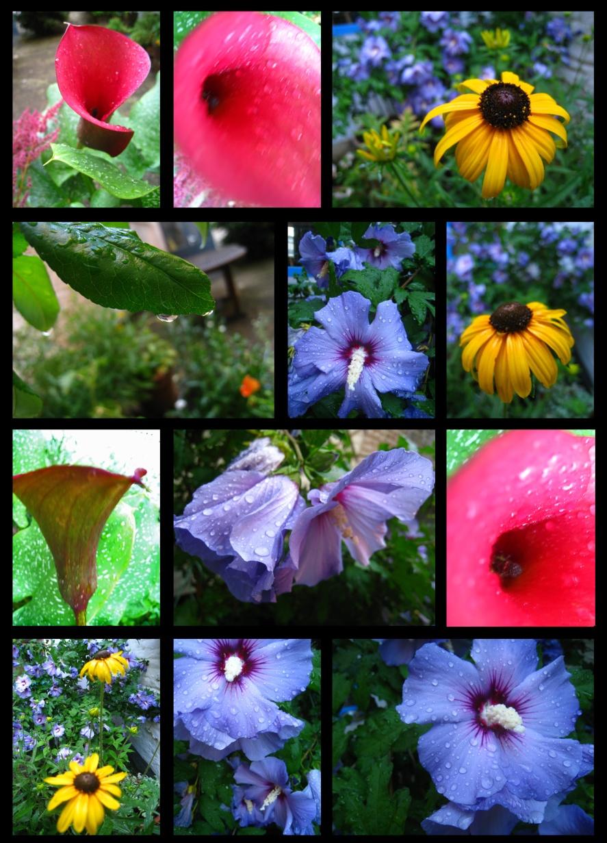 jardin-pluie2