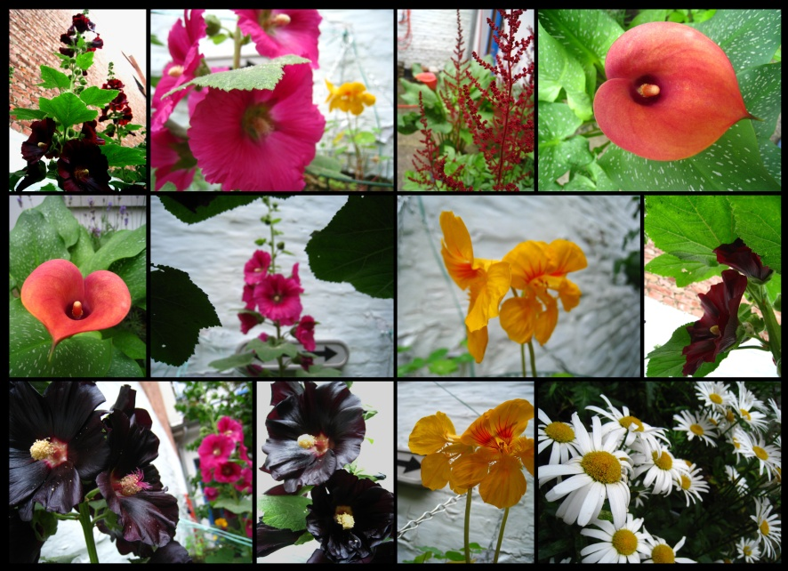 jardin112