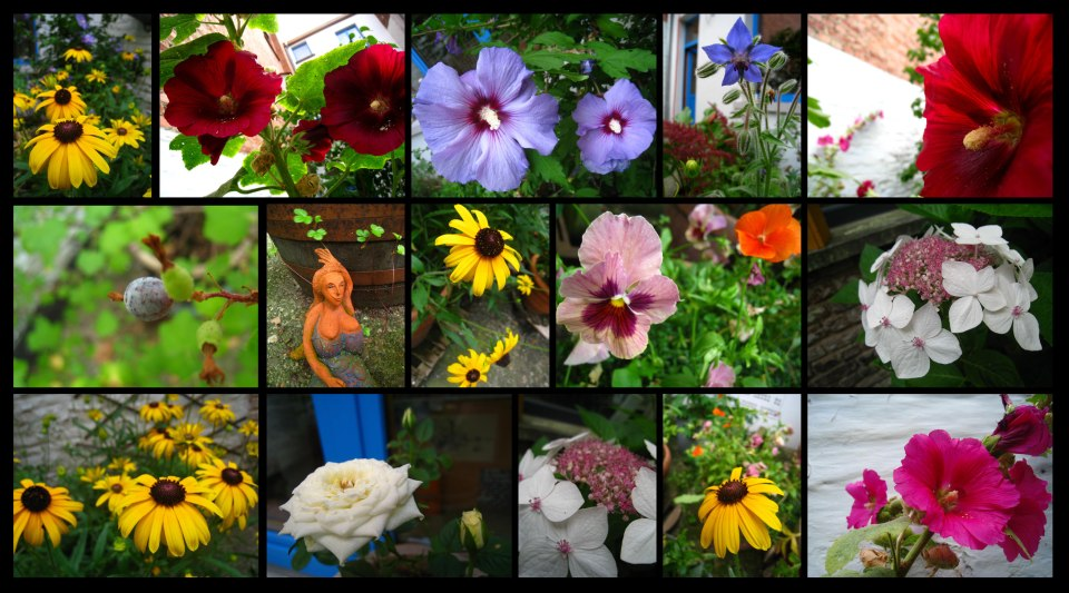 jardindujour