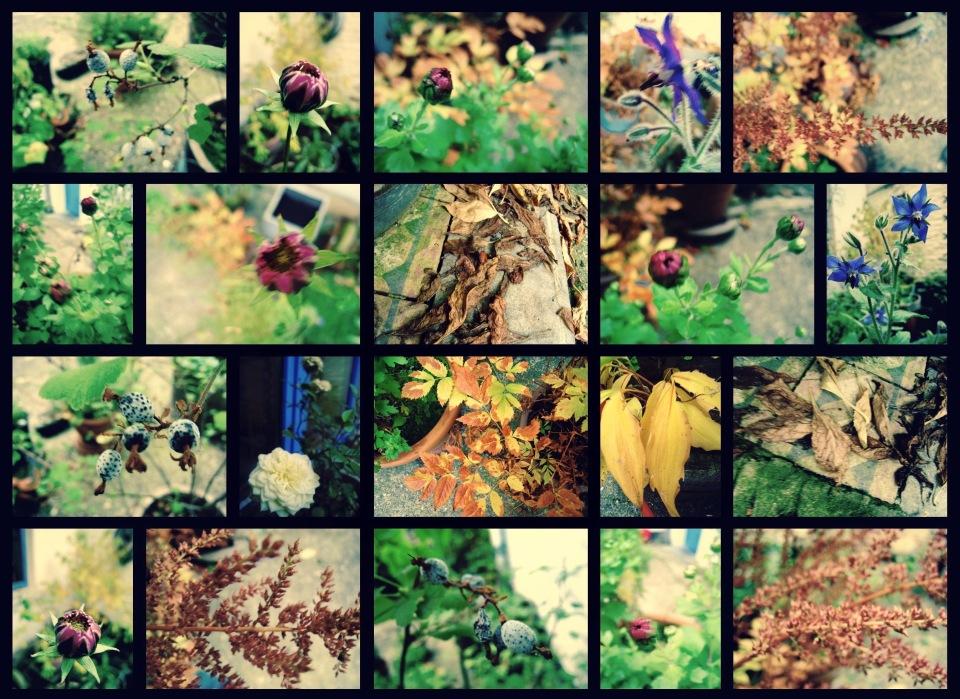 jardin-dautomne-2